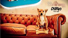 Our Office Winner Dog  Congratz!