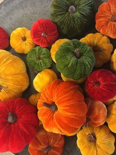 #pumpkins #redpumpkins #greenpumpkins #orangepumpkins #yellowpumpkins #homedeco #autumn #autumntrends #autumnsdeco #homedecotrends #diydeco #othmardecorations