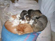 Koty | SABATÓWKA