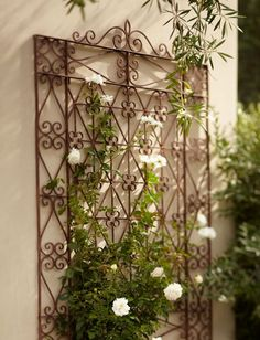 Beautiful, scrolled trellis, but use old wrought iron door...now this is the kind of trellis that I'm talking about, perhaps leaning against my shed side! :)