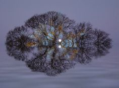 tree and moon reflected
