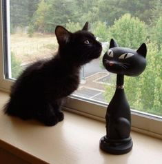 Precious Black Kitten Checking Out the Competition