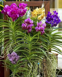 Pruning Orchids, Orchids Garden, Orchid Plant Care, Orchid Plants, Potted Plants, Container Gardening Vegetables, Succulents In Containers, Container Flowers, Container Plants