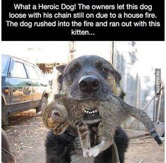 """Look at the dog. There is no chain attached to his collar. He does not look frightened or concerned in any way. This is a dog who leaned that picking up a kitten got everyone to say """"aw"""""""