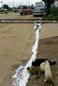Milk truck crashes