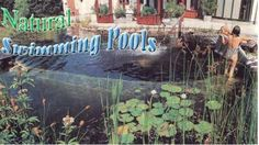 How To Build A Natural Swimming Pool Natural Pond