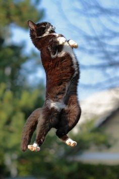 """I can JUMP!""   by Albin Bezkak -- [REPINNED by All Creatures Gift Shop] ""No, I can fly!"""