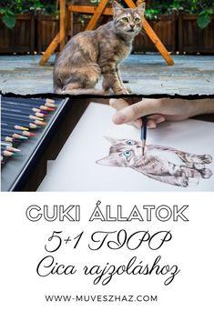 Cuki állatok - Cica rajzolás 5+1 TIPP>>Katt