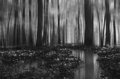 #blackandwhite #forest #trees #darkness #pinit