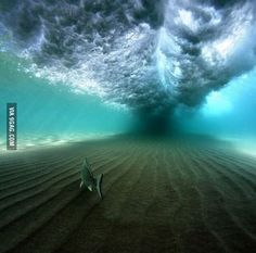Life under the waves