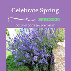 Celebrate Spring Coupon Code #madeinct #soycandles #ctrivercandles #madeinconnecticut #americanmade #candlemaker #springcandlescents