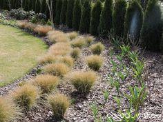 Zielonej ogrodniczki marzenie o zielonym ogrodzie - strona 606 - Forum ogrodnicze - Ogrodowisko