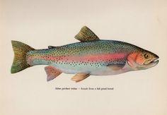 Vintage RAINBOW TROUT Fish Print Vintage Fish by plaindealing