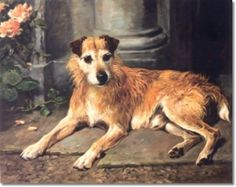 Old Irish Terrier - Painting by John Emms
