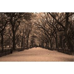 Central Park Sepia Canvas Print ($205) ❤ liked on Polyvore featuring home, home decor, wall art, photographs, photo wall art, landscape wall art and leather wall art