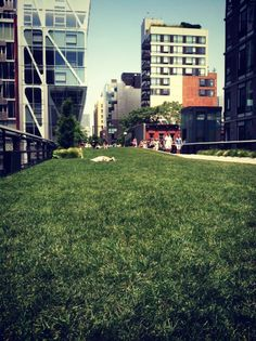 Big Dreams Big City: The Highline