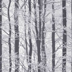"""Frosted Wood Silver 33.5' x 22"""" Floral Wallpaper"""