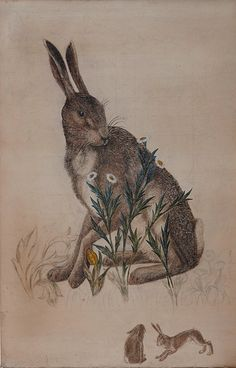 """Philip Webb. Painted in 1886/7- The Hare, study for the William Morris tapestry """"The Forest"""""""