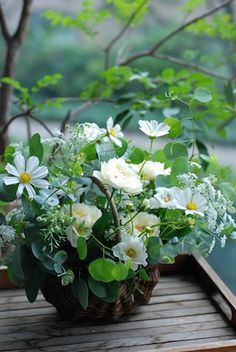White and green mixed floral display in a twig bough base. Ikebana, Green Flowers, White Flowers, Beautiful Flowers, Deco Floral, Arte Floral, Beautiful Flower Arrangements, Floral Arrangements, Flower Vases