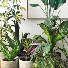 Happy little indoor plant corner Flower Gardening, Planting Flowers, Indoor Garden, Indoor Plants, Succulent Hanging Planter, Umbrella Tree, All About Plants, Plants Are Friends, Herbs Garden