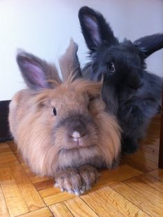 Best friend bunnies live separately but spend their vacations together - May 5, 2013
