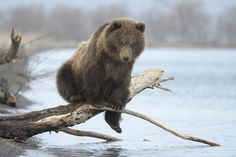 """"""" go fishing without a pole they said"""" , """"you're a bear, they said"""".... """" Ha!"""""""