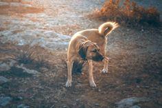 Ξέρετε τι τιμή τα κάνουνε / Όταν τα ζώα αυτά / Τα ονομάζουμε αδέσποτα / Είναι χωρίς κυρίους / Χωρίς αφεντικά το νιώθετε / Αυτό δεν είναι πια τιμή / Αυτό είναι προνόμιο / Γι αυτό και κάθε εξουσία / Τους ρίχνει φόλα με ευχαρίστηση  Αργύρης Μαρνέρος #dog #dogsofinstagram #dogstagram #doggy #straydog #dogsofathens #