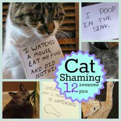 Cat Shaming: 12 Awesome Pics