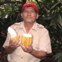 Cacao pone a Piura en los ojos del mundo.