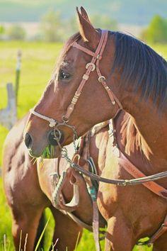 horse - http://www.familjeliv.se/?http://uobd525399.blarg.se/amzn/xwaa633601