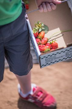 Berry Picking with the Kids | Carrie Ryan for Camille Styles
