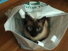 El gato de Laura.  #TopPet 2013: Vótalo o participa tú también: https://basicfront.easypromosapp.com/p/122526