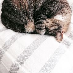 L A Z Y  S A T U R D A Y �� Do it like cats do �� Wish I was my cat some times...But today I'm gonna give my best: sleep, eat, sleep, eat and....well...sleep �� Have a relaxed weekend, everyone ��#weekendgoals #cosy #cat #catlover #home #inspo #stripes #weekend #lazy #photography #potd #instagood #instamood #mood #lazy #relax #chill #comfy #lazydays #saturday #catstagram #interior #interiordesign #blanket #sleep #blogger #bloggerlife #instalife #lifestyle #cute…