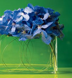 Brides: Blue Orchid and Dogwood Centerpiece. Blue vanda orchids perch on top of a narrow, rectangular vase, while steel grass circles and green dogwood branches are tucked inside. Floral design by Ovando. Cymbidium Orchids, Blue Orchids, Blue Flowers, Spring Flowers, Flower Petals, Flower Art, Flower Ideas, Orchid Centerpieces, Wedding Centerpieces