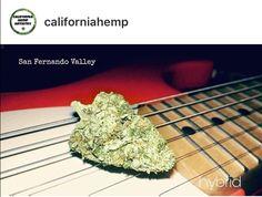 Fender Acoustic, San Fernando Valley, Hemp, California