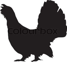Vector of 'silhouette of wood grouse'