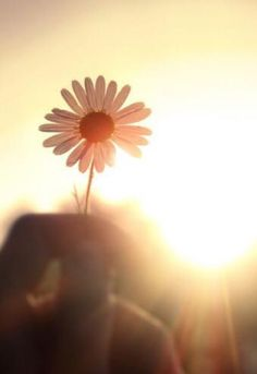 5 El Señor es quien te cuida,     el Señor es tu sombra protectora. 6 De día el sol no te hará daño,     ni la luna de noche.  7 El Señor te protegerá;     de todo mal protegerá tu vida. 8 El Señor te cuidará en el hogar y en el camino,     desde ahora y para siempre.  Salmo 121:5-8