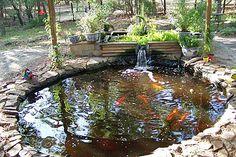 Aquaponic Fish Pond