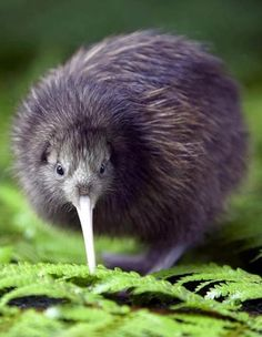Kiwi. Visit us at - http://How2MarketOnline.us