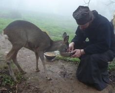 Orthodox monk feeding a young deer. u can see how peaceful Orthodox… Orthodox Priest, Orthodox Christianity, Orthodox Icons, Christen, Kirchen, Our Lady, Bambi, Great Photos, Angels