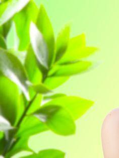 Quer melhorar a qualidade do ar em sua casa ou no local de trabalho? Um estudo apresentado na reunião anual da American Chemical Society's aponta as variedades botânicas capazes de remover do ar as substâncias químicas nocivas