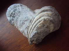 barnacle heart