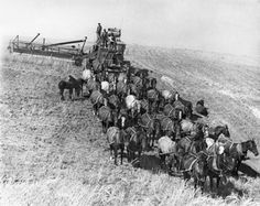 Wheat Harvesting in Sherman county, Oregon. Before Photograph by Will Raymond.