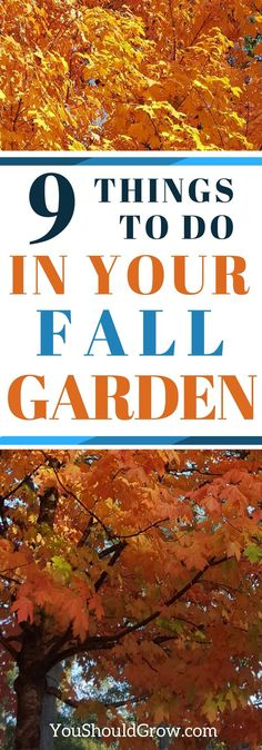 Nine things to do in the fall garden. There are some garden tasks that are best done in the fall. Find out what you need to do in September to have a great garden this fall, winter, and spring.