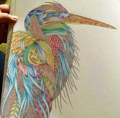 tropical world coloring book ideas - Google Search