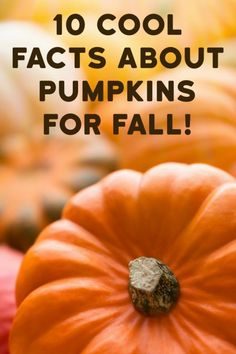 It's pumpkin season! That means it's time for pumpkin soup, pumpkin carvings, pumpkin pie and more. Pumpkins are a fall staple across North America but there's much more to the pumpkin than first meets...