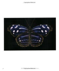 One Hundred Butterflies: Harold Feinstein, Fred Gagnon: 9780316033633: Amazon.com: Books