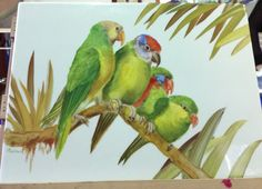 parrots painted with Andreas knobl