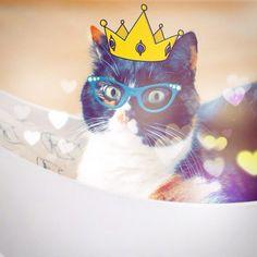 Poofah :))) #cat #cats #catstagram #pet #pets #animal #animals #petstagram #catsofinstagram #ilovemycat #instagramcats #catoftheday #lovecats #furry #meow #adorable #catlover #instacats #instacat #crazycatlady