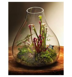 plant terrarium-opencarnivorous plant terrarium-open Double-tap to see more awesome terrariums! Smart Mini Indoor Garden Ideas DIY - Gorgeous terrarium- I think I need to create one of these, and soon. Care carnivorous plants - Venus Flytrap More Get. Cactus Terrarium, Mini Terrarium, Garden Terrarium, Garden Plants, Indoor Plants, House Plants, Glass Terrarium, Water Garden, Plants For Terrariums